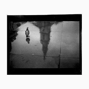 Untitled #29, Pigeon Reflection Trafalgar Sq. From Eternal London, Brunelli, 2013