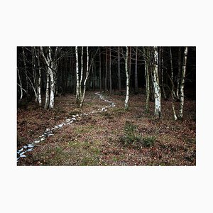 Come With Me 6, Naturfotografie, Ellie Davies, 2011
