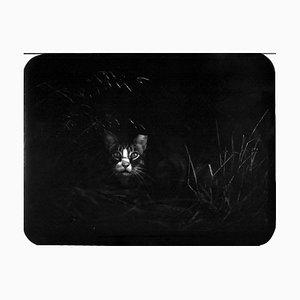 Untitled, Cat in the Bush, Giacomo Brunelli, 2005-2009
