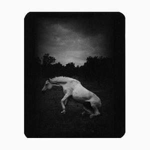 Ohne Titel (Pferd stehend), Giacomo Brunelli, 2007