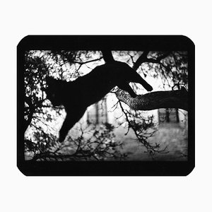 Ohne Titel, Cat Jumping, Giacomo Brunelli, 2006