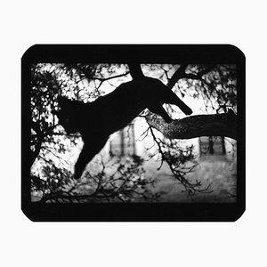 Untitled, Cat Jumping, Giacomo Brunelli, 2006