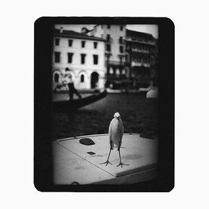 Ohne Titel, Heron Venice, Giacomo Brunelli, Travel Photography, 2007