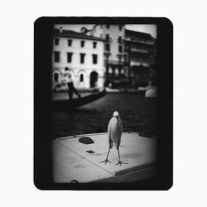 Untitled, Heron Venice, Giacomo Brunelli, Travel Photography, 2007
