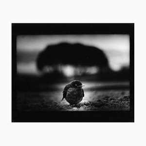 Ohne Titel, Giacomo Brunelli, Animal Photography, 2006