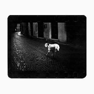 Dreibeiniger Hund, Straßenfotografie, Giacomo Brunelli, 2005