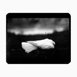 Dove, Photo, Giacomo Brunelli, 2005-2009