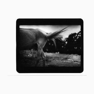 Skinny Horse, Photo, Giacomo Brunelli, 2005-2009