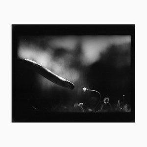 Schlange und Blume, Foto, Giacomo Brunelli, 2005-2009