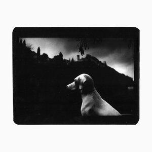 Hundesitting, Fotografie, Giacomo Brunelli, 2005-2009