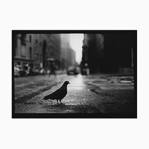 Untitled # 15, Taube Grand Central aus New York, Fotografie, Giacomo Brunelli, 2018