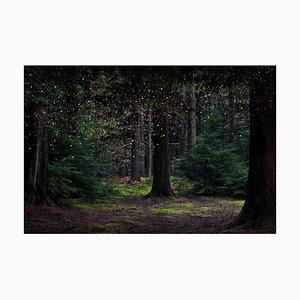 Stars 14, Ellie Davies, Britische Fotografie, Landschaft