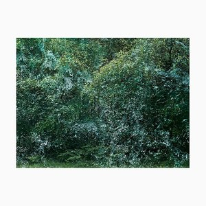 Paisajes marinos 6, Ellie Davies, British Landscape, Forest Imagery