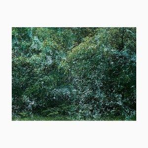 Seascapes 6, Ellie Davies, British Landscape, Forest Imagery
