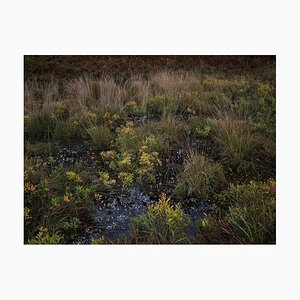 Paesaggi marini 4, Ellie Davies, Fotografia, British Art, Landscapes