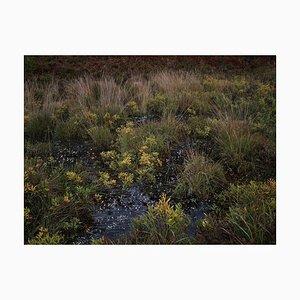 Paisajes marinos 4, Ellie Davies, Photography, British Art, Landscapes