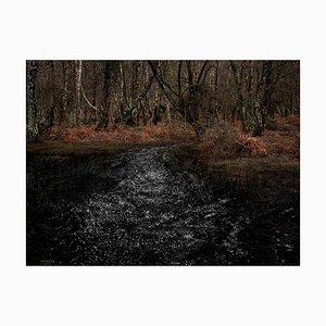 Paesaggi marini 8, Ellie Davies, fiumi, immagini della foresta, paesaggio naturale, 2020