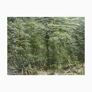 Paesaggi marini 9, Ellie Davies, Fotografia naturalistica, 2020