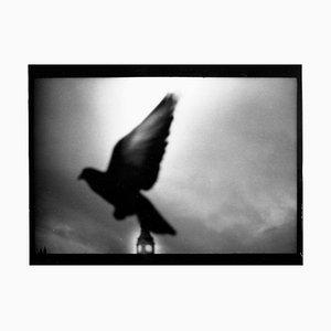 Untitled #3, Pigeon Big Ben from Eternal London, Giacomo Brunelli, 2013