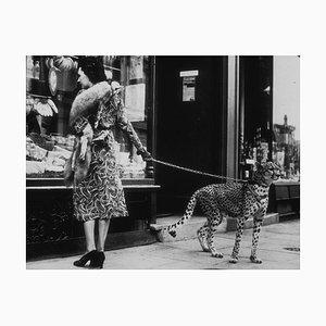Gepard, der stoppt, Tier-Fotografie