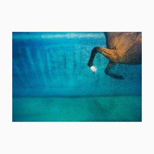 Equus on Blue, Animal Photograph, 2006