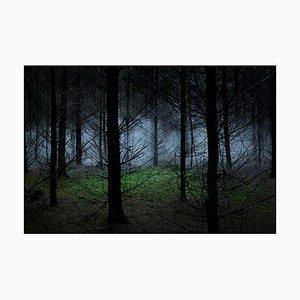 Zwischen den Bäumen 8, Ellie Davies, 2014