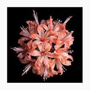 Hadehah, British Photography, Flowers