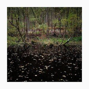 Half Light 10, Ellie Davies, Photograph