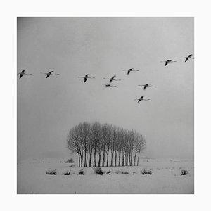 Blanco 3, White Landscape, Snow Scene, Photograph, 2010