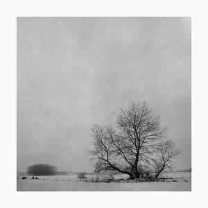 Blanco 7, Winter Imagery, 2010