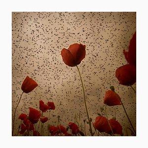 Blick in den Himmel 14, Rosa Basurto, Fotografie, Blume