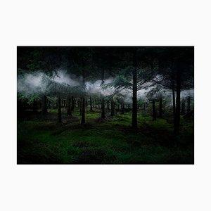 Zwischen den Bäumen 3, Ellie Davies, Forests, 2014