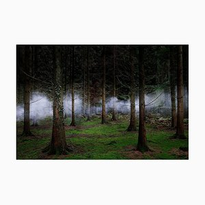 Between the Trees 1, Ellie Davies, Photograph, 2014