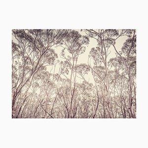 Eukalyptus II, Britische Fotografie, Landschaft, 2013