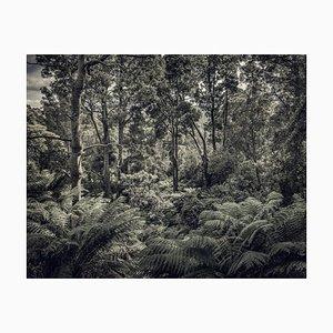 Fern Forest II, Britische Fotografie, Natur, 2013