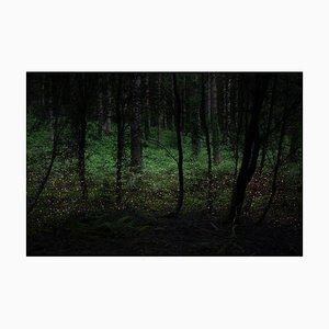 Stars 4, Ellie Davies, Fotografie, Landschaft, 2014