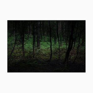 Stars 4, Ellie Davies, Photograph, Landscape, 2014