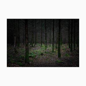 Stars 11, Ellie Davies, British Photograph, 2015