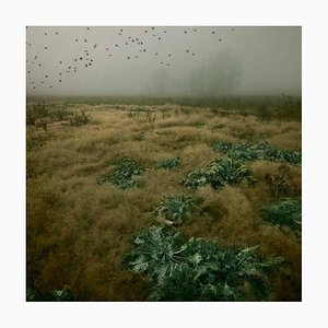 Blick auf Sky 5, Rosa Basurto, Nature