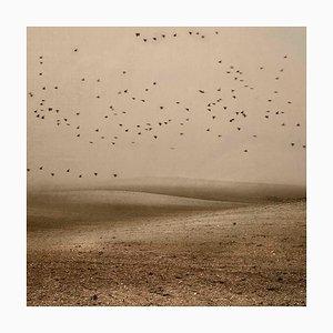 Mit Blick auf den Himmel 15, Rosa Basurto, Landschaft, Vogel Fotografie