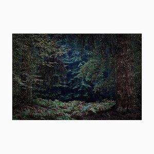 Stars 13, Ellie Davies, Britische Fotografie, 2015