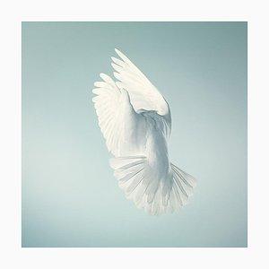 Cape Wings, Britische Kunst, Tierfotografie