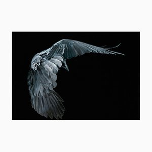 Art of Dying, British Art, Animal Photograph, Bats