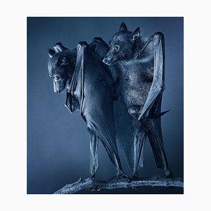 Compassion, Britische Kunst, Fotografie, Fledermäuse