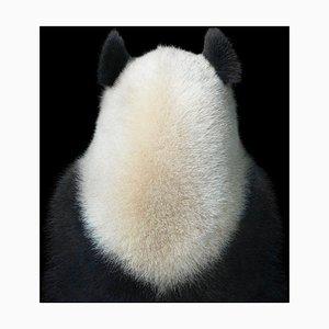 Ji Li Lucky, Britische Fotografie, Pandas