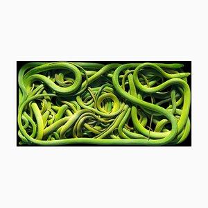 Raue grüne Schlangen, britische Fotografie, Natur