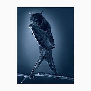 Opernschläger, Britische Kunst, Tierfotografie