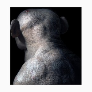 Jambo, Britische Kunst, Tierfotografie, Papagei