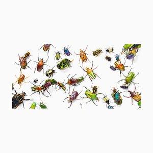 Flower Beetles, Britische Kunst, Tierfotografie, Insekten