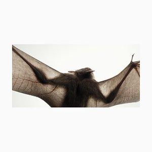 Simiform 6, Britische Kunst, Tierfotografie, Silhouette